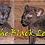 Thumbnail: Eddy The Black Leopard Magnet