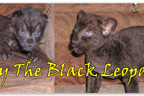 Eddy The Black Leopard Magnet
