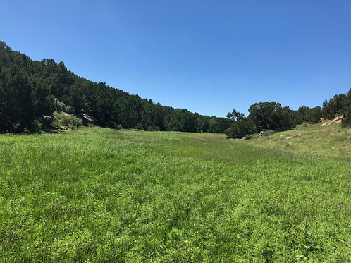10 Acres of Land