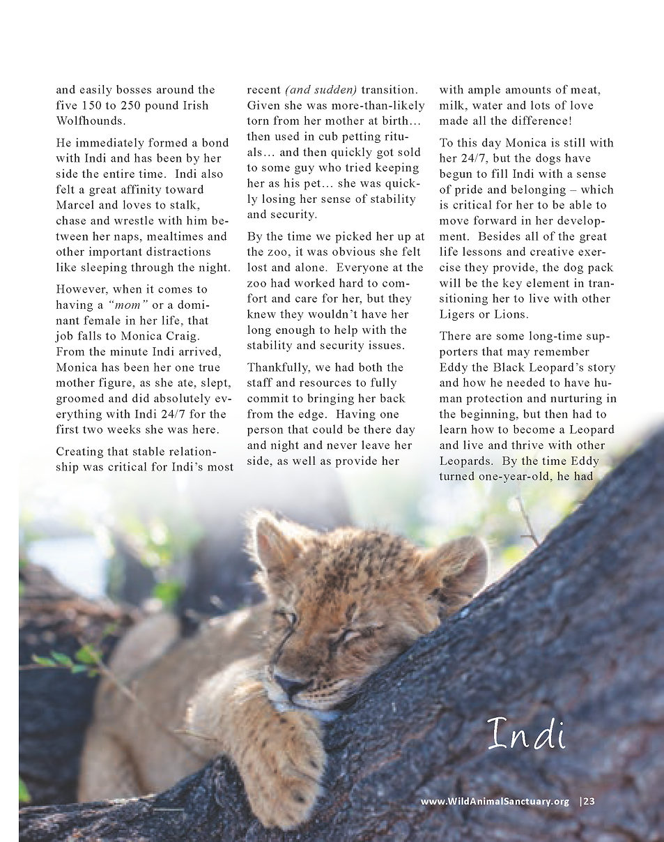 Wildlife In Need Rescue_Page_17.png