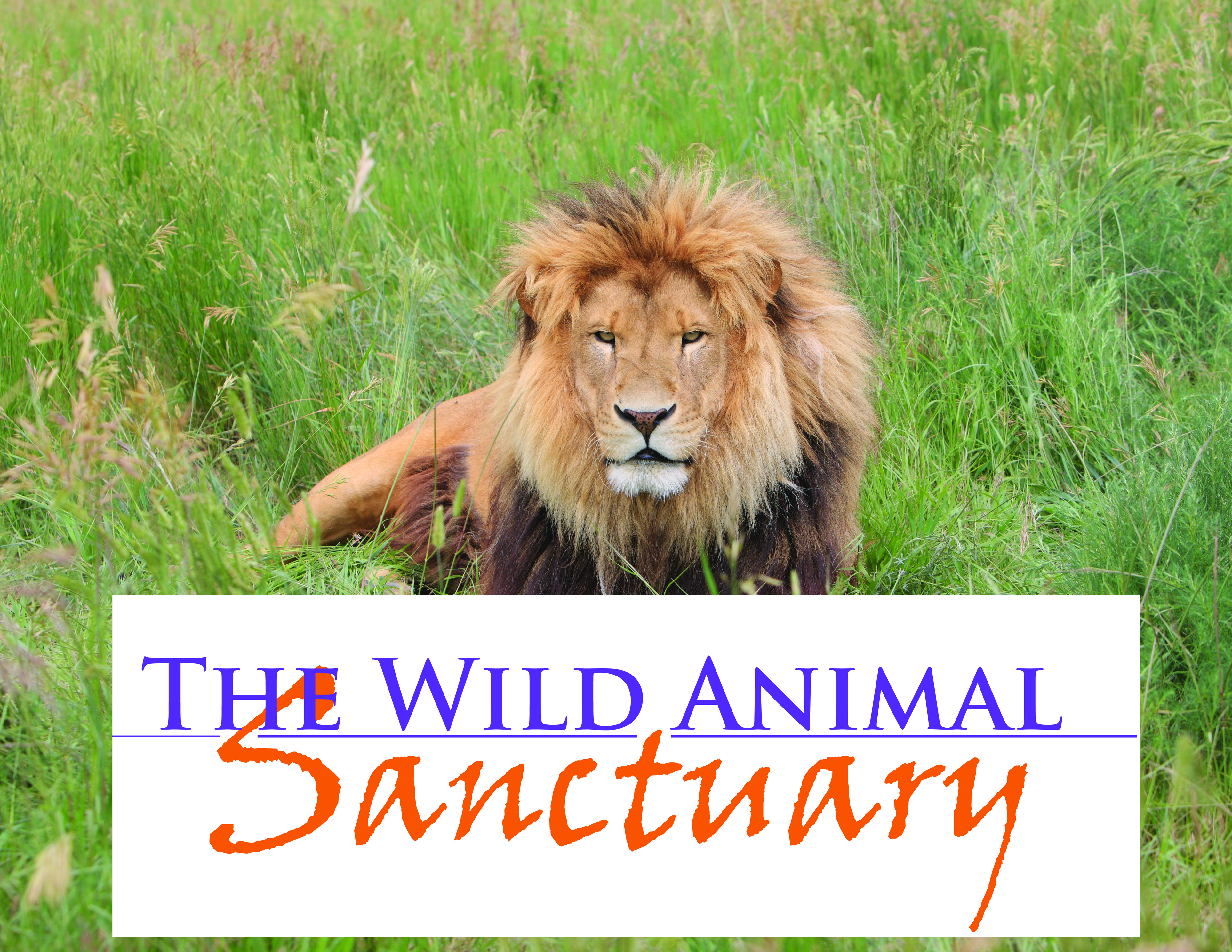 Image of: Sanctuary District Of West Vancouver The Wild Animal Sanctuary Keenesburg Co Visit Us