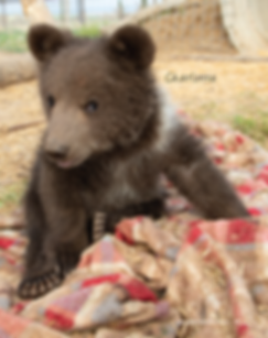 Bear cubs story_Page_4.png