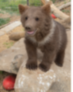 Bear cubs story_Page_5.png