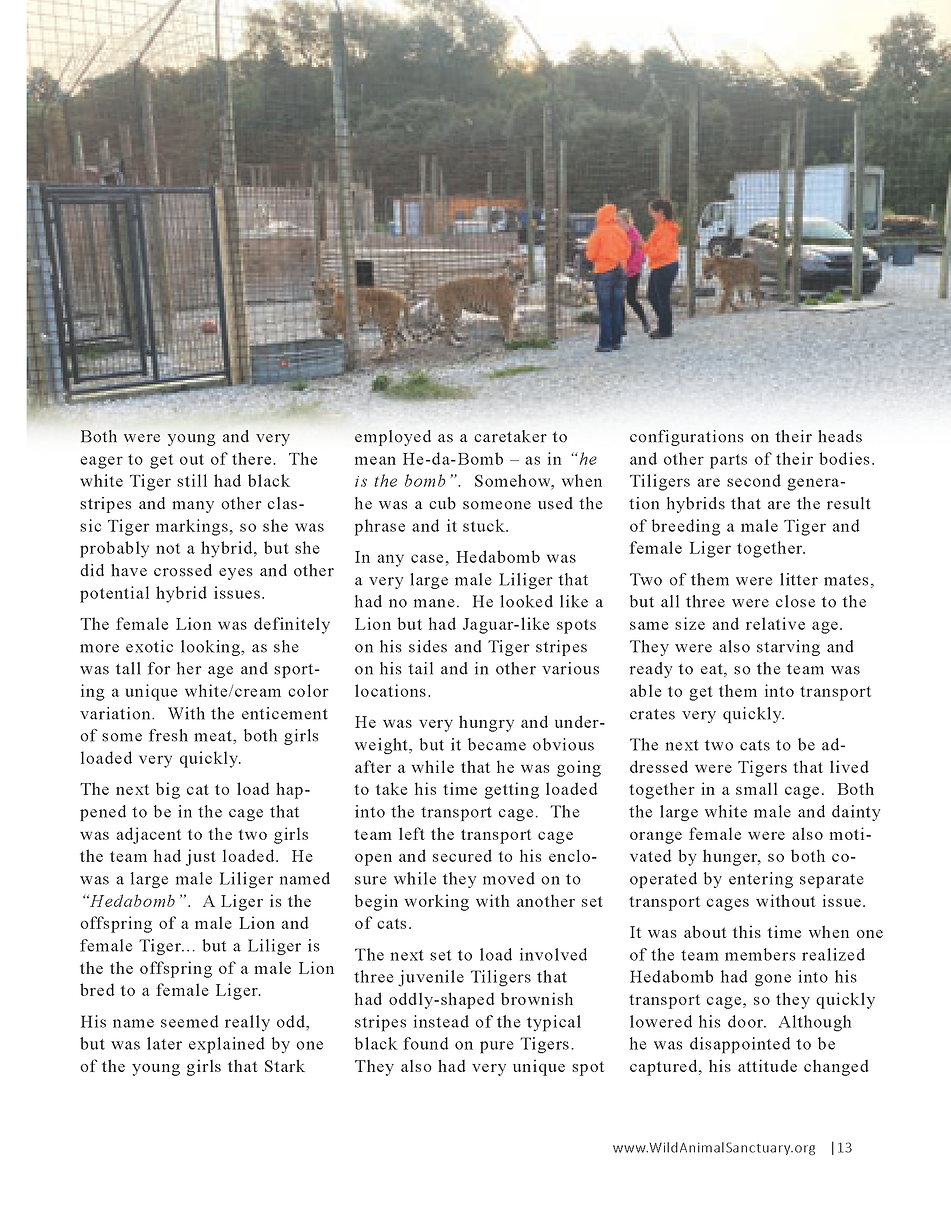 Wildlife In Need Rescue_Page_07.png
