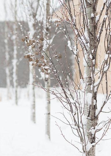 Winter%20Walk_edited.jpg