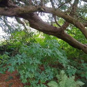 A tree in Pennant Melangell