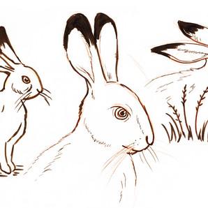 "Development sketches for ""Melangell's Lambs"""