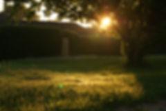backyard-garden-grass-13975.jpg