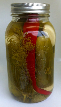 Hot Garlic Dill Pickles