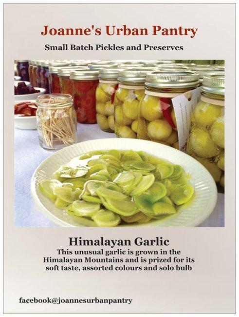 Himalayan Garlic,