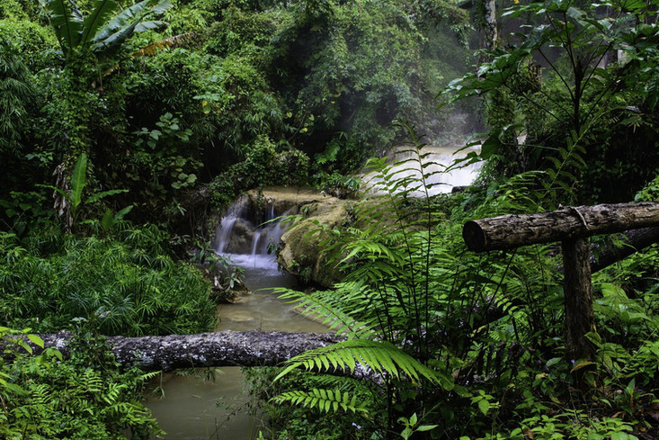 forest-waterfall-3098200_1920.jpg