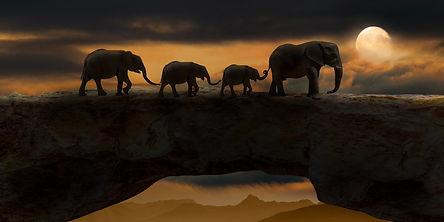 elephants-5661842_1920.jpg
