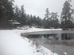 looking past pond towards house on snowly day.jpg