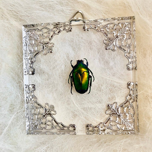 Scarab Beetle in Lucite Shadowbox