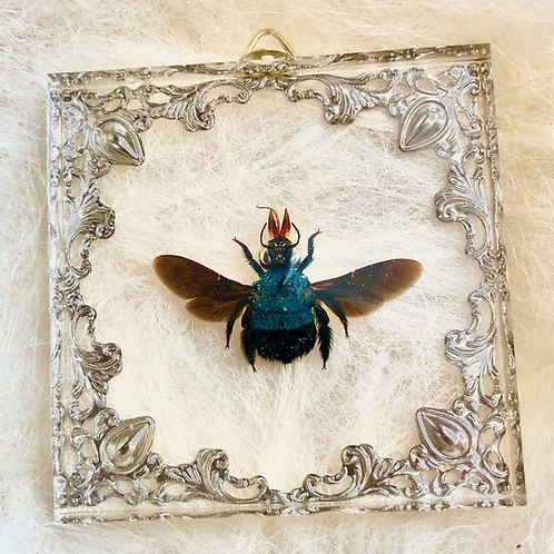 Blue Bee in Lucite Shadowbox