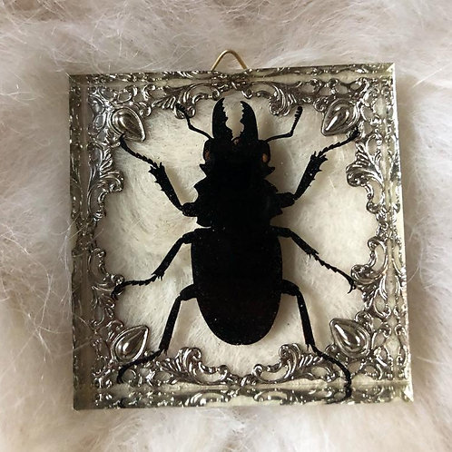 Giant Stag Beetle in Lucite Shadowbox #2