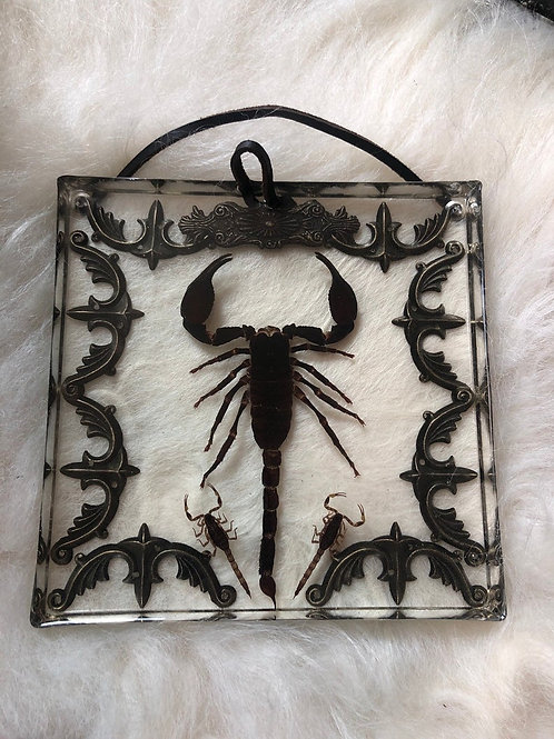 Giant Scorpion in Lucite Shadowbox with 2 Small Scorpions