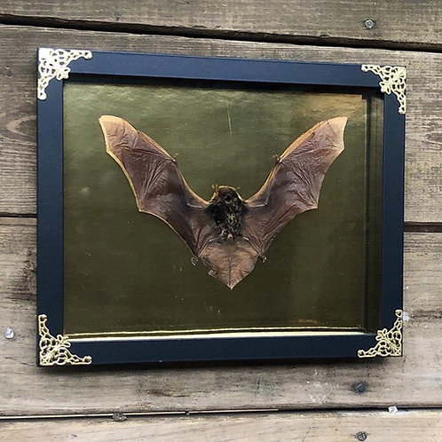 Black Bat in Gold and Black Gothic Shadowbox