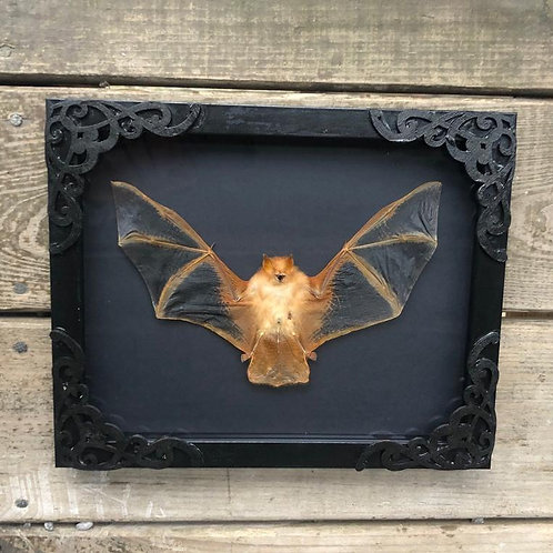 Painted Bat in Black Shadowbox