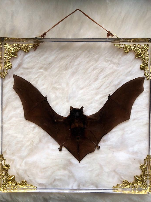 Bat in Lucite Shadowbox