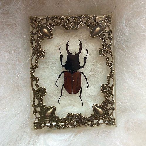 Beetle in Lucite Shadow Box