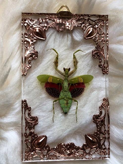 Flower Mantis in Lucite Shadowbox