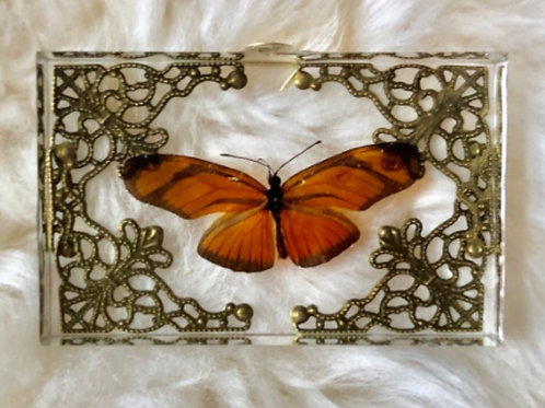 Flame Butterfly (Dryas iulia) in Lucite Shadowbox