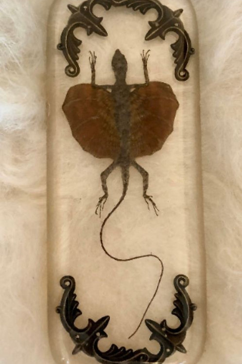 Flying Lizard in Lucite Shadowbox
