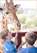 GiraffeAndBoys_edited.jpg