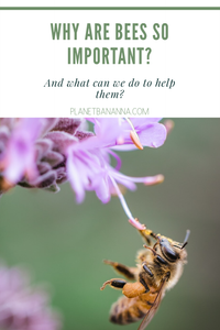 why are bees important and what can we do to help