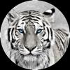 Image d'un tigre