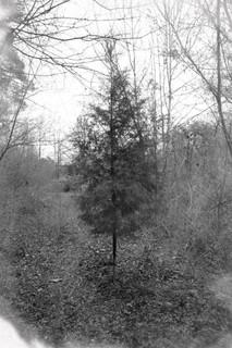 Tree Alone