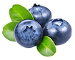 Blueberry 3.png VECTOR.png