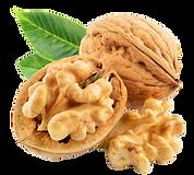 Walnut 2.pngVECTOR.png