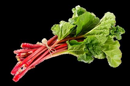 Rhubarb 3.pngVECTOR.png