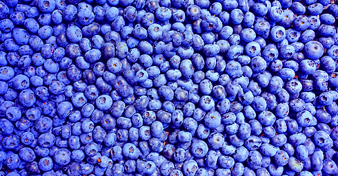 Blueberry background copy.png