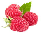 Raspberry 4.png VECTOR.png
