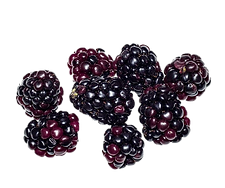 Boysenberry 2.png VECTOR.png