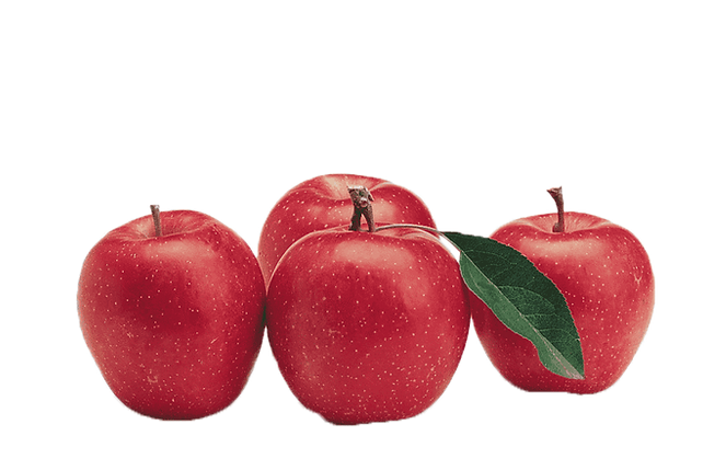 Apple 4.png VECTOR.png