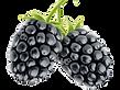Blackberry 6.pngVECTOR.png