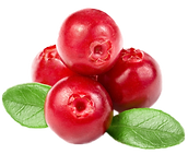 Cranberry 2.png VECTOR.png