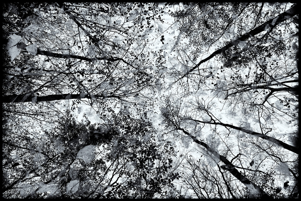 above and below oben und unten tree baum branch ast leaf blatt
