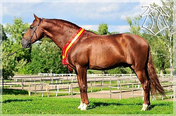 Fer Avellado (Mañoso II & Kanaka III, c. Yeguada Ferrero, t. Kara Pura Raza Española, PRE, spanska hästar