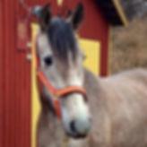 Hera XXX (Codicioso–MAC & Yedra VIII, c. Kara P.R.E.) Kara Pura Raza Española PRE spanska hästar