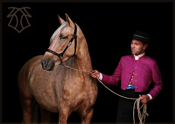 Gandula A & Philip Belhoussine 2015, photo by Therese Hübner Kara Pura Raza Española PRE spanska hästar