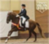 Fer Avellado – Campeón Absoluto de Funcionalidad 2013 & Annika Ericsson, Kara Pura Raza Española PRE spanska hästar