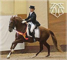 Fer Avellado – Campeón Absoluto de Funcionalidad & Annika Ericsson, Kara Pura Raza Española PRE spanska hästar