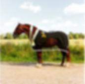 Fer Avellado – Campeón del Concurso & Campeón de los Mejores Movimientos Kara Pura Raza Española PRE ANCCE spanska hästar