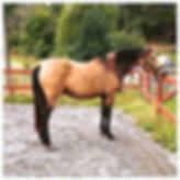 Cometa de Kara, Kara Pura Raza Española PRE spanska hästar