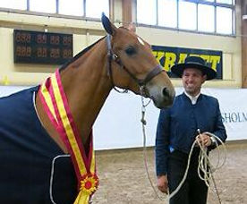 Jota CA – Campeona Joven & Campeón de los Mejores Movimientos Jovenes 2013 & Philip Belhoussine, Kara Pura Raza Española PRE spanska hästar